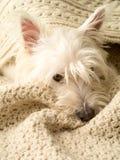 Cão Snuggling Imagem de Stock