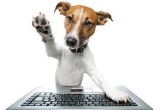 Cão usando um computador Foto de Stock Royalty Free