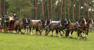 Coach pulled by eight Shire horses Royalty Free Stock Image