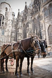 Coach in Vienna. Coach on front of the Stephansdom, a familiar Church in Vienna Royalty Free Stock Photos