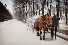 Coach in Vienna. Horses and carriage, Vienna, Austria Royalty Free Stock Image