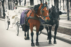 Coach in Vienna. Horses and carriage, Vienna, Austria Royalty Free Stock Photos