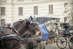 Coach in Vienna. Horses and carriage, Vienna, Austria Stock Photo