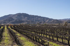 Coachella Valley, California vineyard Stock Photos