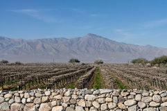 Coachella Valley, California vineyard Royalty Free Stock Images