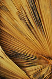 Coachella Valley Lost Palm Oasis Stock Photo