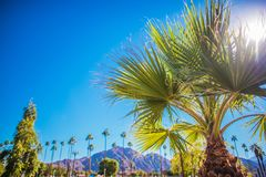Coachella Valley Vegetation. Palm Springs, California, United States of America Royalty Free Stock Images