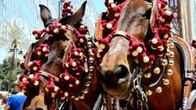 Coachman with bedecked horses at the fair, Jerez de la Frontera stock footage