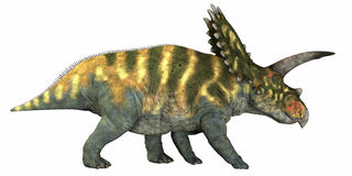 Coahuilaceratops su bianco Immagini Stock