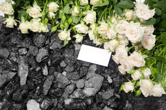 Coal background white roses card Stock Photography