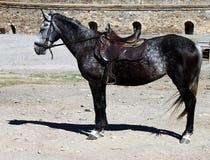 Coal black horse Stock Photography