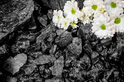 Coal daisies background industry Royalty Free Stock Photos