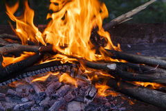 Coal,fire,firewood in the brazier Royalty Free Stock Photography