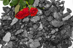 Coal flower background red roses Stock Images