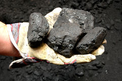 Coal in hand Stock Photography