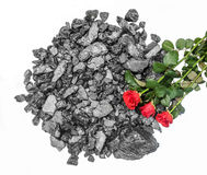 Coal red roses cut out Royalty Free Stock Image