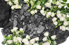 Coal stone background white roses Royalty Free Stock Photos