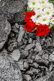 Coal stone red roses daisies mining Royalty Free Stock Images
