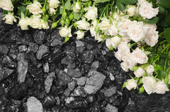 Coal stone white roses background Royalty Free Stock Photo