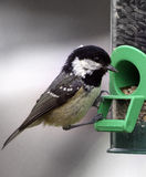 Coal Tit. A Coal Tit, on a bird feeder mounted outside the caravan at the camp site in Oban we were staying at Royalty Free Stock Photos