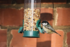 Coal Tit on feeder Royalty Free Stock Image