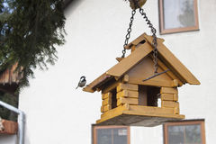 Coal Tit on a garden bird feeder, blurred background Stock Images