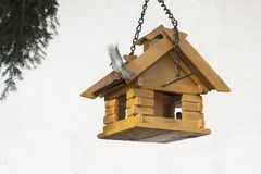 Coal Tit on a garden bird feeder, blurred background Stock Image