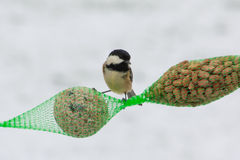 Coal tit. (Periparus ater) on bird feeder in snow Stock Photos
