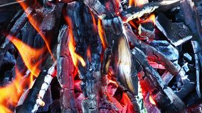 Coal and Wood Fire stock footage