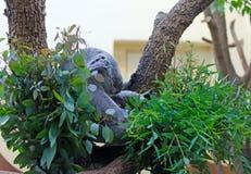 Coala drömmar arkivfoton