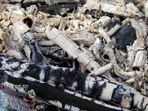 Coals of a burning campfire. Close up stock image