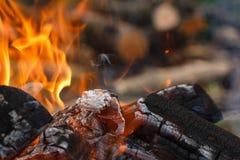Coals of campfire closeup Royalty Free Stock Photo