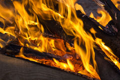 The coals of a campfire in the forest closeup stock photo