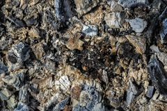Coals in an extinct fire. Natural background royalty free stock photo