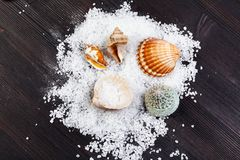 Coarse grained Sea Salt and seashells on table. Top view of coarse grained Sea Salt and seashells on dark brown wooden board royalty free stock photos
