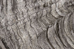 Coarse wood grain Royalty Free Stock Photo