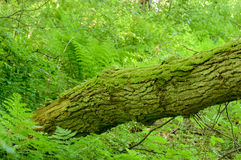 Coarse woody debris Stock Image