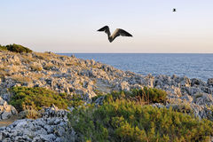 Coast. Beautiful horizon view with seagulls flying at dusk over the coast Royalty Free Stock Photos