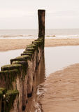Coast. Wooden breakwater on the North Sea coast in The Netherlands stock photography