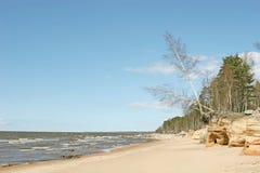 Coast. Stony beach view (Baltic sea coast, Latvia Stock Images