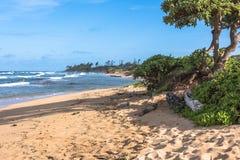 The coast along Lihue, Kauai, Hawaii. Vegetation along the Lihue coast in Kauai, Hawaii Royalty Free Stock Image