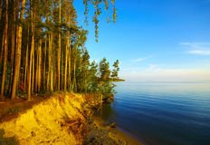 Free Coast And Sunset Trees Stock Image - 9981571