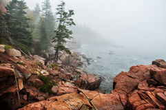 Coast of the Atlantic Ocean in the fog. Rocky beach with coniferous trees on the cliffs. Acadia National Park. Maine. USA Stock Image
