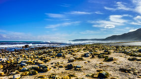 The coast on the Atlantic Ocean side of Cape of Good Hope Royalty Free Stock Photo