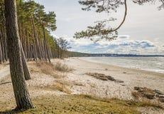 Coast of Baltic sea, sunny day Royalty Free Stock Photo