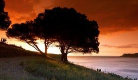 Coast of Banyuls Stock Photography