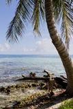 Coast of Belize Stock Photos