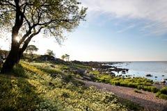 Coast of Bornholm Royalty Free Stock Images