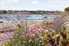 Coast of Brittany covered with flowers Stock Photo