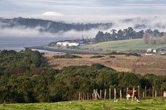 Coast of Chiloe island, Chile Stock Images